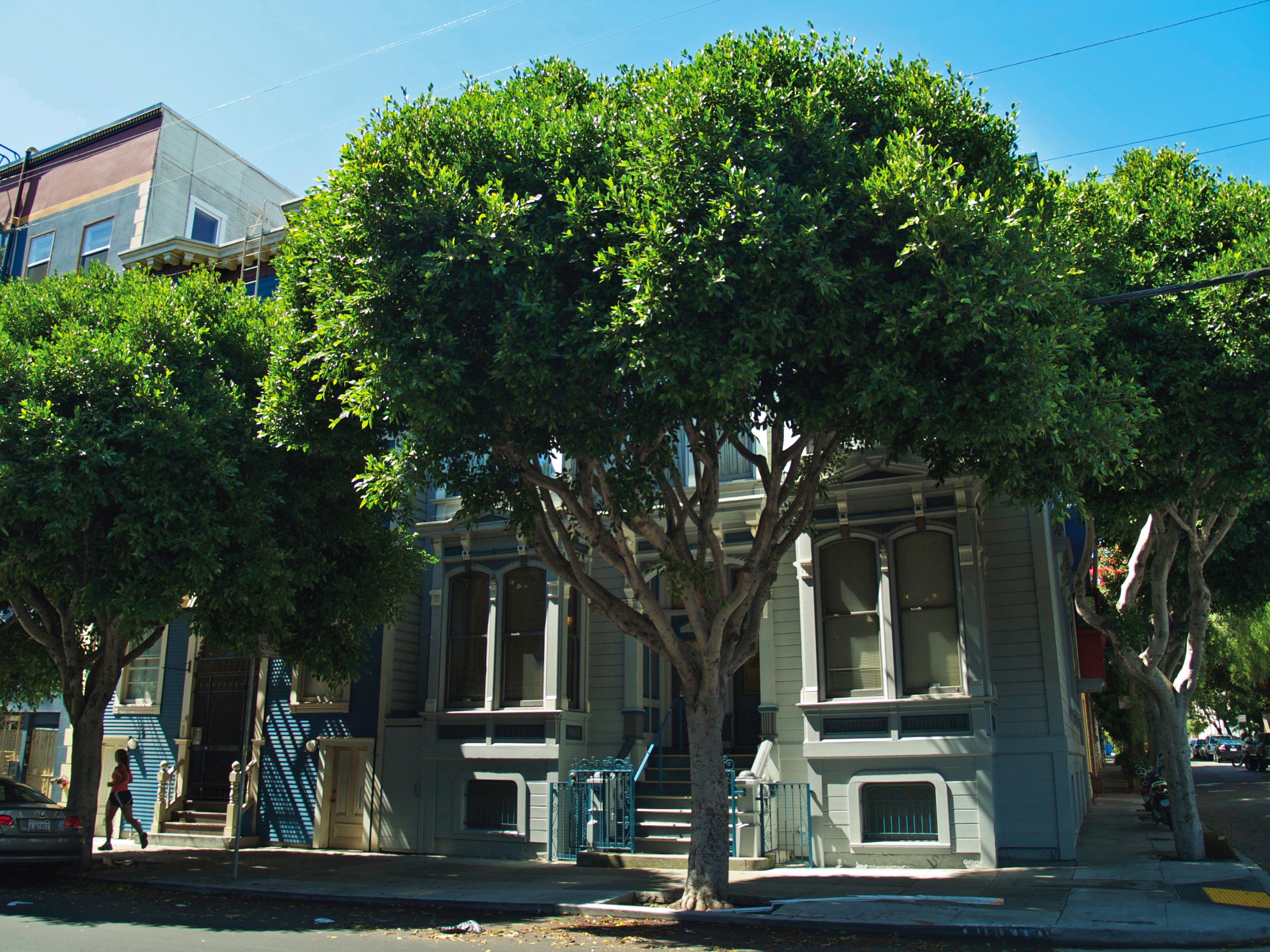 tree-lined street in SF